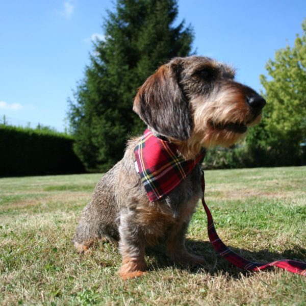 Collier Woofstock Red
