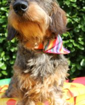 Collier Woofstock Rainbow