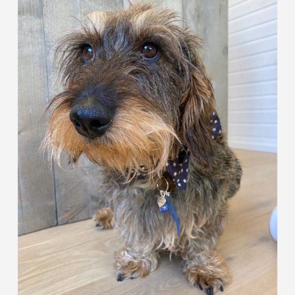 bijou pour chien lucky Charm